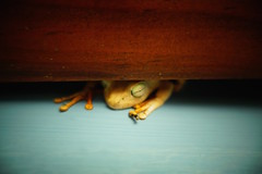 Sapo (r y o m a) Tags: latinoamerica travel trip viaje sapo frog sleeping dormir