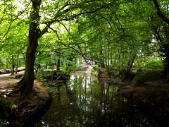 Country Park (captain_flynn23) Tags: coombeabbey countrypark warwickshire nature trees water lake river landscape unitedkingdom uk england