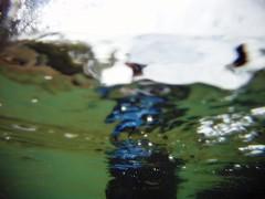 GOPR5897 (ambrogi_taubate) Tags: naturezaselvagem marinha mergulhando ubatuba sp brasil naturezamarinha fantstica apneia 10m setembro primavera 2016