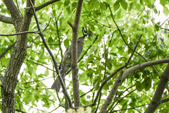 P1070064 (jinkemoole) Tags: nagaikoen bulbul bird animal