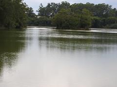 DSCN0270 (apacheizabel) Tags: lago pssaros rvores cu pinhas tronco espelho dgua queroquero rolinhas banco no bosque famlia de galinhas passeio parque centro aeroespacial da aeronutica cta so jos dos campos sp