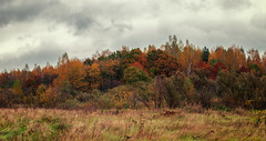 autumn pano#5 (Monshtadoid) Tags: russia autumn forest landscape nature tree colourfull red orange hill pano fall panorama clouds sky dramatic
