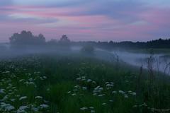 "Milky River Teza on Summer Sunset // ""          "" (nsapronov) Tags: grass tezariver  russia  ivanovoregion dunilovo   evening  summer bluehour june river   twilight green fog    ivanovooblast slovenia"
