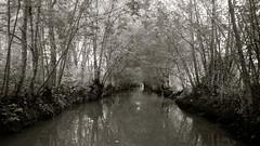 Alone (pi3rreo) Tags: nikon coolpix nature extérieur eau water forêt marais
