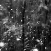 Marshland Grasses 041 (noahbw) Tags: d5000 dof nikon sedgemeadowforestpreserve abstract autumn blackwhite blackandwhite blur bokeh bw depthoffield grass landscape leaves light marshland monochrome natural noahbw prairie shadow square sunlight wetlands