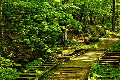 LRa05-24-16k-IMG_2511_12_13HDR- (Glotzsee) Tags: nature virginia blueridgeparkway blueridgemountains blueridge railroadtracks hdr glotzsee