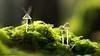 Herbstleuchten (Peter Lochschmied) Tags: pilz moos wald mushroom wood herbst autumn elitegalleryaoi bestcapturesaoi