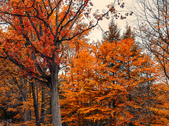 red_hots (gerhil) Tags: landscape nature tree plant color serene outdoor autumn october2016 nikcolorefexpro4 foliage texture 1001nights 1001nightsmagiccity