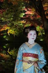 Maiko20161119_06_06 (kyoto flower) Tags: kodaiji temple fukuno kyoto maiko 20161119      noblesseoblige