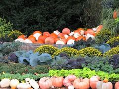 Pumpkins and More (Cher12861 (Cheryl Kelly on ipernity)) Tags: mortonarboretum lisleillinois pumpkins mums ornamentalcabbages log harvestdisplay fall autumn season
