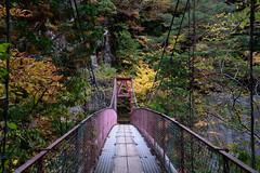18Mitarai Valley (anglo10) Tags:    bridge japan    valley  autumnleaves