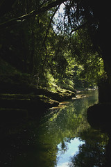LC25 (Mirovski_25) Tags: river gorge forest green