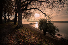 sunny autumn (bjdewagenaar) Tags: sun trees nature river water landscape waterscape beach clouds sky autumn gorinchem gorcum holland dutch a58 alpha sony sigma wide angle raw lightroom
