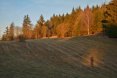 DSC_7034 (Karel Suchnek) Tags: evening sunset late autumn firstfrost