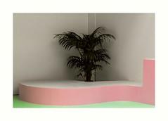 Palmier domestique (hélène chantemerle) Tags: arbres art expositions palaisdetokyo sculptures végétaux palmier murs angle rose vert blanc géométrie exhibition palmtree wall pink green white geometry