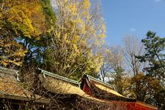 DSC02820 (MrSUIZOU) Tags: 京都 紅葉 北野天満宮 平野神社 十月桜