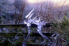 A Frosty Morning in Wales (caren (Thanks for 1 Million+ views)) Tags: frostymorning icesculpture westwales ceredigion cymru wildgarden naturalart natural landscape landschaft