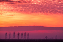 Tree Line Sunset 01 (Photograferry) Tags: sunset trees treeline evening twilight dusk landscape thefens cambridgeshire clouds red colourful scenics beautyinnature nopeople outside mist fog