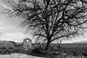 Monterano 2009 ps2016 (fabio c. favaloro) Tags: monterano 2009 italy bnw nikon d300 sigma1020 fabiocfavaloro tree old riuns