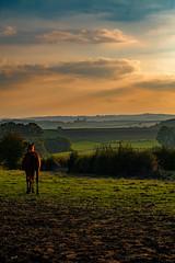 2016 10 29 - Sunset-10 (OliGlo1979) Tags: fuji luxembourg xt2 xf50140 landscape sunset horse silhouette