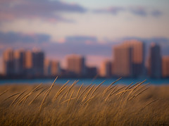 Whispers (Philocycler) Tags: montrosepark evening light bokeh grass canon canon5dmarkiii ef200mmf28liiusm chicagoist lakemichigan skyline golden beauty nature