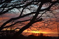 autumn morning (Eric - horse traveler) Tags: sunset sky sun ciel aube paysage landscape tree arbre morning matin