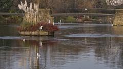 By The Lake (Jay-Aitch) Tags: alexandrapark oldham heron serene lake bridge lumix g vario 14140f3556 panasonic gm5