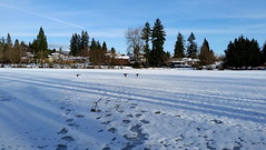 Follow the leader (bottledale999) Tags: beautiful bc vancouver coquitlam lake winter frozen ice blue sky landscape scenic christmas dinner snow sun sunny sunshine wildlife ducks birds flight fly flying nature houses neighborhood canada british columbia samsung