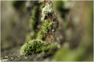 Macro Mondays - It's Alive - Moss on a wall