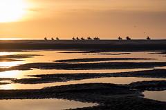 Dernier galop sur la plage (amateur72) Tags: letouquet xf55200mm goldenhour mer plage sable sunset xt1