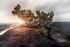 Lilienstein Kiefer (blende einspunktacht) Tags: sächsischeschweiz sachsen saxonygermany saxony germany deutschland lilienstein light licht sun sunset landscape landschaft nature canon tokina