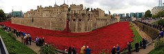 Tower of London Poppies. (konstantynowicz) Tags: red london blood poppy poppies lands swept toweroflondon seas poppys bloodsweptlandsandseasofred toweroflondonpoppies