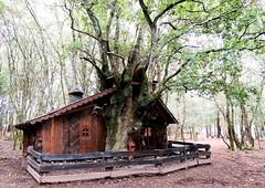 4022-Reserva de MarcelleNatureza en Outeiro de Rei (Lugo).