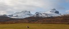 Mt. Dyrfjoll (*Jonina*) Tags: snow mountains iceland ísland snjór fjöll 50faves dyrfjoll dyrfjöll borgarfjörðureystri borgarfjordureast jónínaguðrúnóskarsdóttir