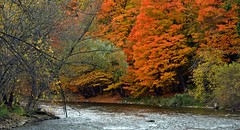 The place to be (markupnorthcanada) Tags: autumn trees orange ontario canada tree green fall colors yellow river branch background shoreline credit shore