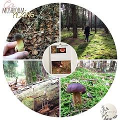 Animiert vom Kalenderblatt für Oktober 2014 (http://t.co/teD3zl6y6h) haben wir uns heut im Wald auf Pilz-Suche gemacht. | Go mushroom picking.  #autumn #fall #herbst2014 #herbst #hooray #hoorayfortoday #travel #travelblog #travelingram #traveltheworld #ig