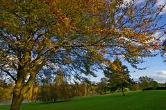 1046-30L (Lozarithm) Tags: landscape 12mm 1224 kx bowood derryhill treesshrubs smcpda1224mmf40edalif pentaxzoom