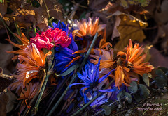 Bouquet in the Woods (Photo Art Marie) Tags: