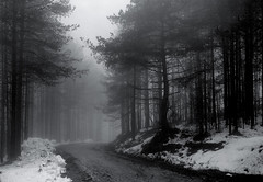 Misty woods (BG Sixtyniner) Tags: road camera winter bw white mist black film fog analog woods graphic path super 4x5 lf hp5 sheet f56 rodinal press bellows ilford largeformat graflex 135mm divcibare nikkorw