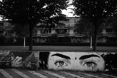 You looking at me? (Jeroen de Lang) Tags: barendrecht