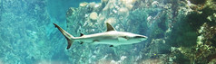ocanopolis brest (20) (STEPHANE COSTARD PHOTOGRAPHIE) Tags: ocean light sea colors aquarium shark bretagne brest requin aquatic parc finistre ocanopolis