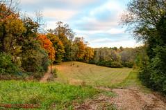 Early Morning at Ellington Agricultural Center - November 1, 201 (mikerhicks) Tags: usa fall landscape geotagged sam unitedstates nashville hiking tennessee hdr whisperinghills photomatix ellingtonagriculturalcenter miniatureaustralianshepherd sigma18250mmf3563dcmacrooshsm canoneos7dmkii geo:lat=3606427667 geo:lon=8674390333