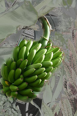 fruit spain banana panasonic tenerife canary tarzan canarybananas