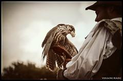 Fauconnerie (Petite Salamandre) Tags: bird buzzard oiseau puy fou oiseaux bal falconry falconer predatory rapace buse puydufou fauconnier fantmes fauconnerie lebaldesoiseauxfantmes