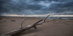 END (Zhouboq) Tags: tree beach death no gray taiwan future end taipei tamsui