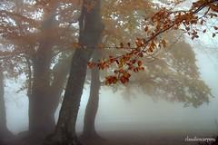(claudiophoto) Tags: autumn nature leaves fog foglie forest landscape natural natura getty nebbia autunno marche appennino lemarche atmosfere boschi landscapedreams paesaggidellemarche marchepaesaggi fotodellemarche montidellemarche