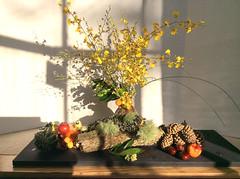 morimono (Anny Schaefer) Tags: japanese ikebana flowerarranging morimono