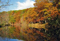 Autumn colors............. (GeorgeM757) Tags: autumn color nature weather autumncolors