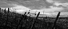Fall in the vineyard II (mexou) Tags: fall vineyard chapel 50mm12 wormeldange koeppchen 5diii