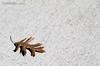 (Professional Photography & Videography) Tags: california park autumn trees usa plant como tree fall nature colors leaves foglie alberi canon landscape lago eos interestingness bravo san russia outdoor interestingness1 natura foliage explore primo 7d di monte albero autunno colori canoneos martina rifugio lario lariano triangolo i500 18135mm canon7d